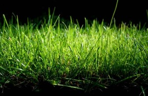 football-field-grass-up-close-website